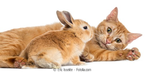 Versorgung und Betreuung eines Haustieres als haushaltsnahe Dienstleistung